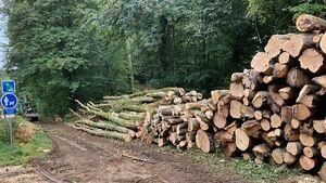 2021 09 16 Forêt Parcelle 3 a